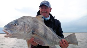 Mike Perez, from Sarasota, FL, with big Louisiana black drum caught and released on a fly while fishing out of Hopedale, LA.