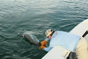 Capt. Rick Grassett lands a tarpon caught and released by Cliff Ondercin while fishing with Capt. Rick Grassett in a previous June.