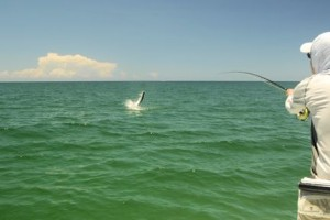 Rusty Chinnis, from Longboat Key, jumps a tarpon caught and released on a fly while fishing with Capt. Rick Grassett.