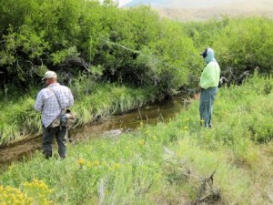Guide Dave King, of King Outfitters in Dillon, MT, and Mike Perez, from IN, fish a Montana spring creek for brookies with hoppers on 3 and 4-weight fly tackle.