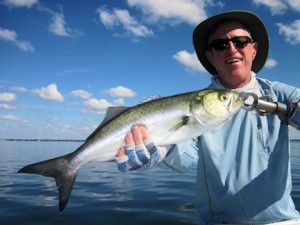 Blues should be plentiful on deep grass flats of Sarasota Bay in November. Marshall Dinerman, from Atlanta, caught and released this one on a CAL jig with a shad tail while fishing with Capt. Rick Grassett in a previous November.