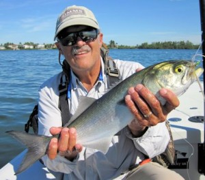 Jim Collins, from Bradenton, FL, caught and released this bluefish in Sarasota Bay on an Ultra Hair Clouser fly while fishing with Capt. Rick Grassett.