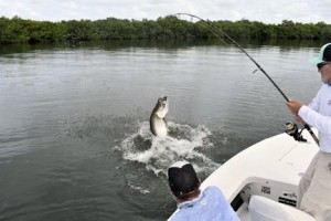 Dennis Ondercin, from OH, fights a tarpon to the boat while fishing Charlotte Harbor recently with Capt. Rick Grassett.