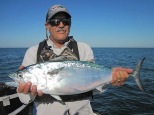 Jim Cannon, from Bradenton, with a nice false albacore (little tunny)  caught and released in Sarasota on a fly while fishing with Capt. Rick Grassett in a previous November.